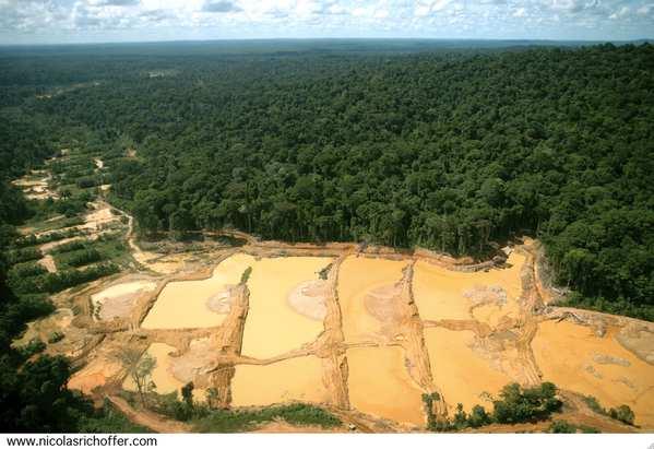Dévastation de la forêt guyanaise par les multinationales chercheuses d'or
