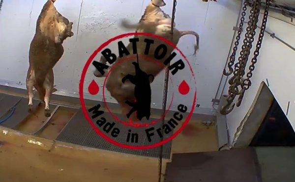 Abattoir d'Alès. Quand la souffrance animale reflète la souffrance des humains