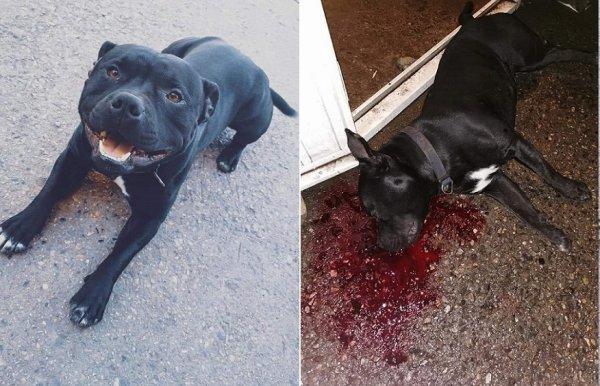 """VIDEO. """"En 1 seconde, le policier a tiré 1 balle dans la tête de mon chien"""""""